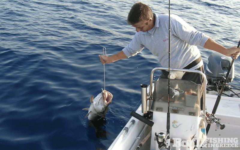 Η τελευταία σκηνή στο πιάσιμο ενός μεγάλου ψαριού, είναι το αγκίστρωμα με τον γάντζο, που πάντα φροντίζουμε να υπάρχει στο σκάφος σε βολικό σημείο, έτοιμο προς χρήση όταν ζητηθεί.