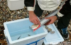Καταμέτρηση αλιευμάτων