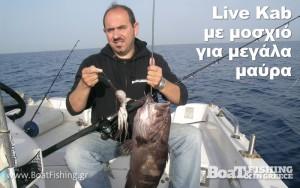 liveKAB_01