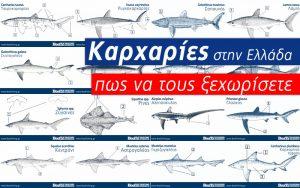 Καρχαρίες στην Ελλάδα - Sharks in Greece