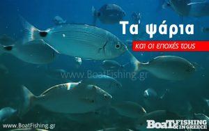 Enhmerwsh Image